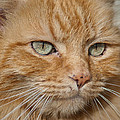 Fierce Warrior Kitty by Greg Nyquist