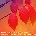 Fiery Colors by Ian  MacDonald