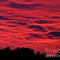 Fiery Sky by Lloyd Alexander