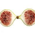 Fig In Half by Perry Van Munster