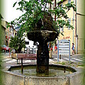 Fig Tree Fountain In Cassis by Carla Parris