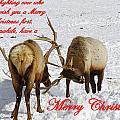 Fighting Over Wishing You A Merry Christmas by DeeLon Merritt