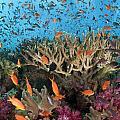 Fiji Reef Riot by Freund Gloria