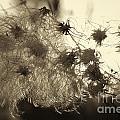 Filaments by Eunice Gibb