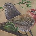 Finch Delights by Robin Gorton