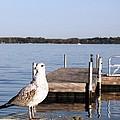 Finger Lake Gull by Jaime  Manning