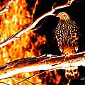 Fire Hawk 0112 by James Ahn