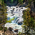 Firehole River Falls by Robert Bales