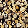 Firewood by Carlos Caetano
