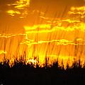 Firey Sunset by Shannon Harrington