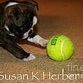 First Ball by Susan Herber