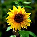 First In Bloom by Kari Tedrick