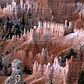 First Light In Bryce Canyon by Sandra Bronstein