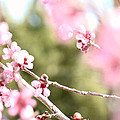 First Signs Of Spring by Missee Jo
