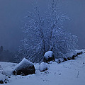 First Snow At First Light by Susan Capuano