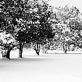 First Snow by Hannah Breidenbach