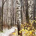 First Snow. Hidden Path by Jenny Rainbow