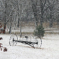 First Snow by Teresa Carvell