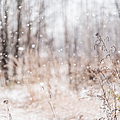 First Snow. Winter Mood by Jenny Rainbow