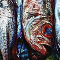 Fresh Fish At The Market by Skip Nall