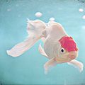 Fish In The Sea by photo by Anna Theodora