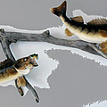 Fish Mount Set 03 C by Thomas Woolworth