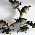 Fish Mount Set 05 A by Thomas Woolworth
