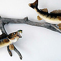 Fish Mount Set 06 A by Thomas Woolworth