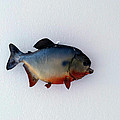 Fish Mount Set 12 A by Thomas Woolworth