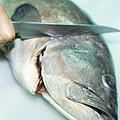 Fish Preparation by Cristina Pedrazzini