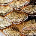Fish Scales by Odon Czintos