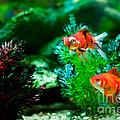Fish Tank by Matt Malloy
