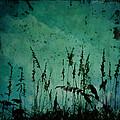 Five Crows by Sharon Kalstek-Coty
