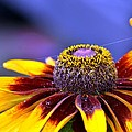 Flakes Of Pollen by Maria Urso