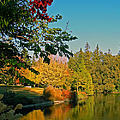 Flame Tree At Lake Spafford by Pamela Patch