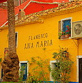 Flamenco Ana Maria by Iain MacVinish