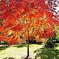 Flaming Fall