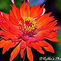 Flaming Orange Flower by Ruth Yvonne Ash