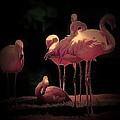 Flamingo 3 by Andrew Drozdowicz