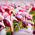 Flamingo 7 by Sean Wray