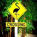 Flamingo Crossing by Kimberly Perry
