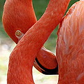 Flamingo Eight by Beth Phifer