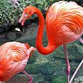 Flamingo River Walk by Elizabeth Hart