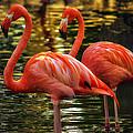 Flamingos by Linda Tiepelman