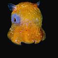 Flapjack Octopus by Dante Fenolio