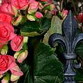 Fleur De Lis by Lyndi Heckaman
