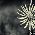 Fleur Jaune by CJ Schmit