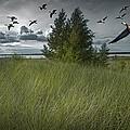 Flight Along The Bay by Randall Nyhof