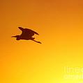 Flight by Joan McCool