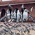 Flight Of Pigeons Inside The Jama Masjid In Delhi by Ashish Agarwal